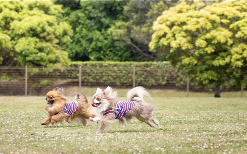 住之江公園ドッグランで遊ぶワンちゃん!