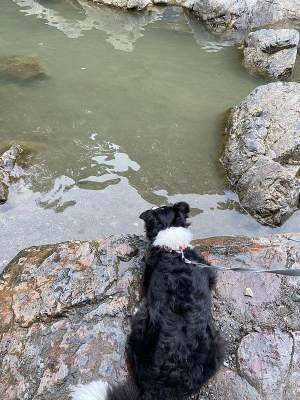 川遊びをしている犬